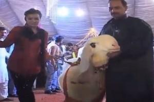 Qurbani fashion show Video Lahore