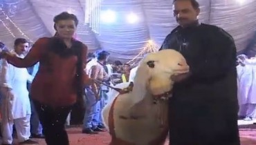 Qurbani fashion show Video Lahore